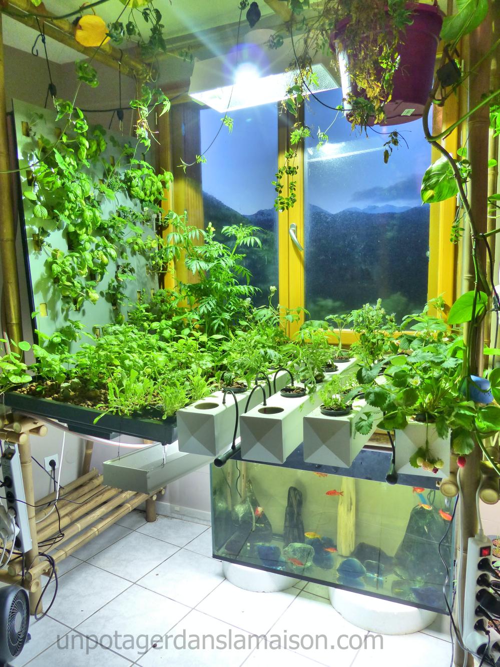 au labo volution de notre syst me aquaponique cosmic garden. Black Bedroom Furniture Sets. Home Design Ideas
