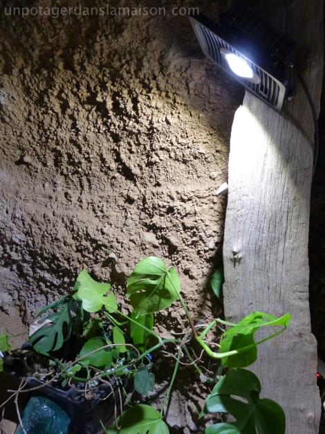 grotte-led-plantes_fotor